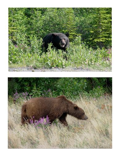 Bears copy.jpg