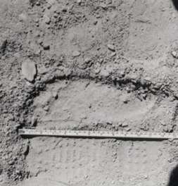 13 inch track depth compared to shoe prints 2b.jpg