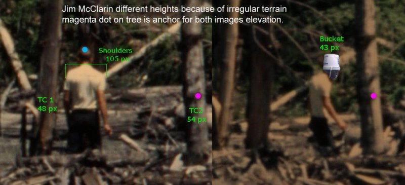 McClarin Trees Measured.jpg