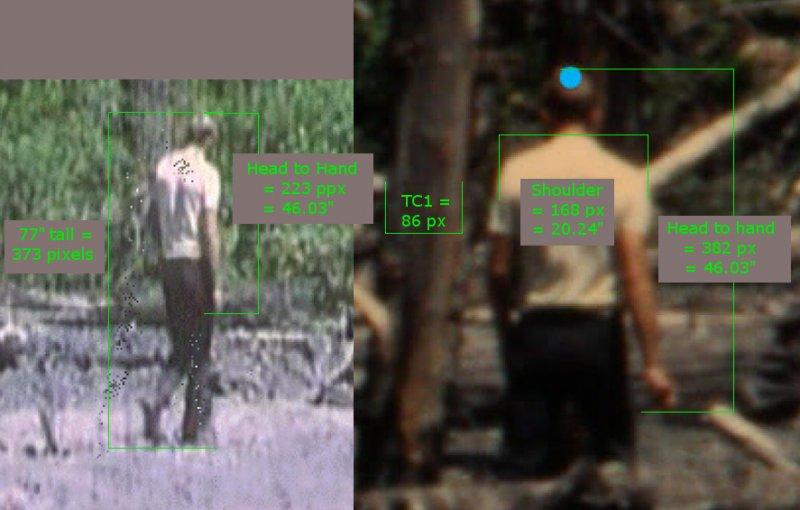 McC Shoulder Calculated 2.jpg
