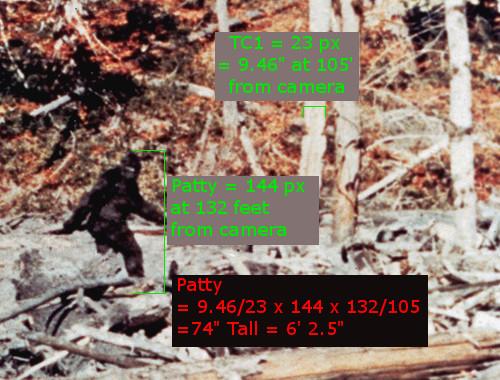 Patty Calculated 2.jpg