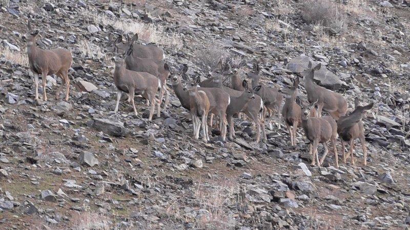 Deer 004.JPG