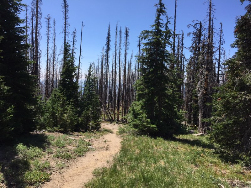 Death Zone #2 Mt Adams Wilderness.JPG