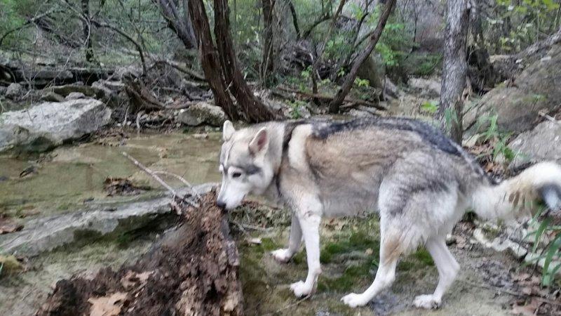 Lulu Near Falls Creek.jpg