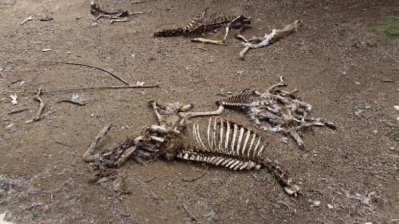 Deer Kill 6.jpg