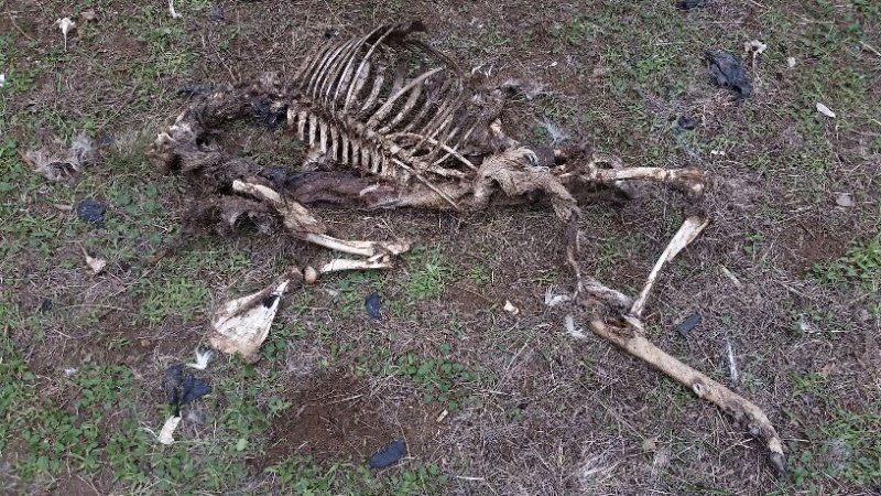 Deer Kill 36.jpg