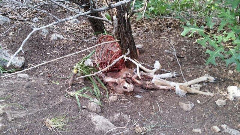 Deer Kill 29.jpg