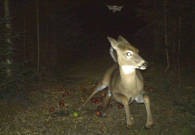 flying squirrel attack.jpg