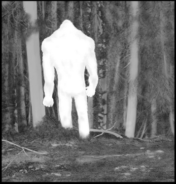 The Best, Most Plausible, Detailed Bigfoot Reports (by SSR Score)