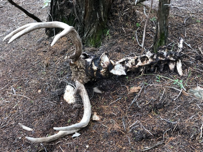 Deer Kill 45B.jpg