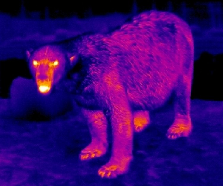Thermal Imagers In Bigfoot Country