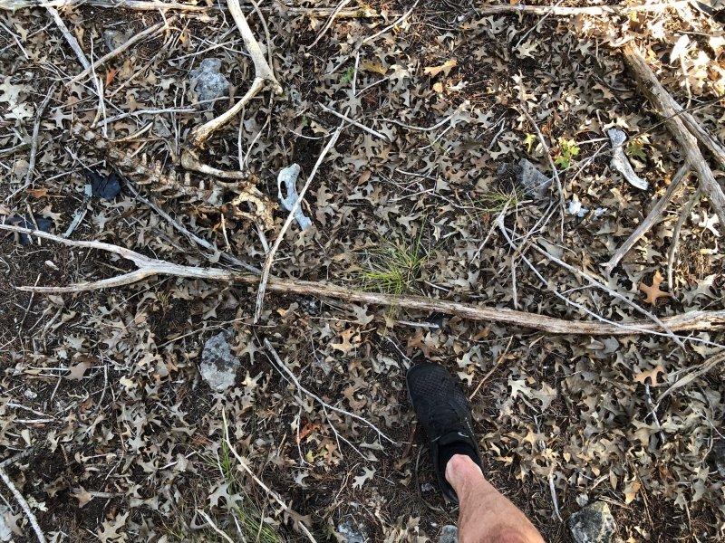 Deer Kill 47B.jpg