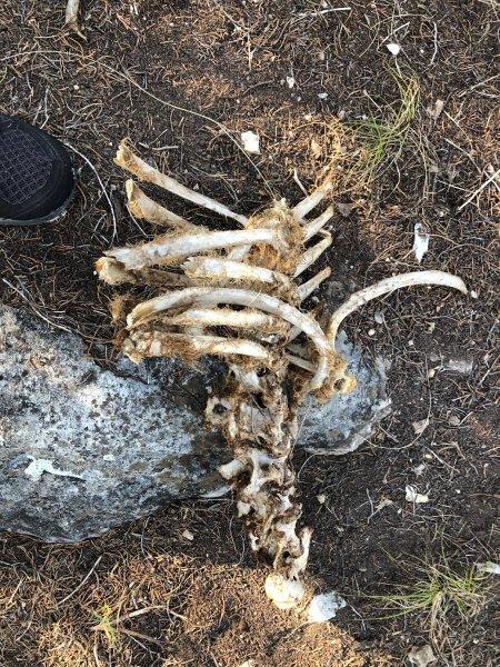 Deer Kill 48.jpg