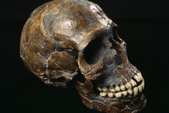 neanderthal-cover.jpg