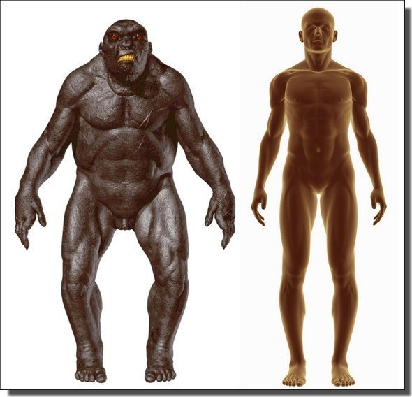 neanderthal-human-body-comparison.jpg