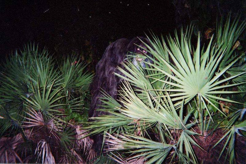 skunk-ape-alleged-sighting.jpg