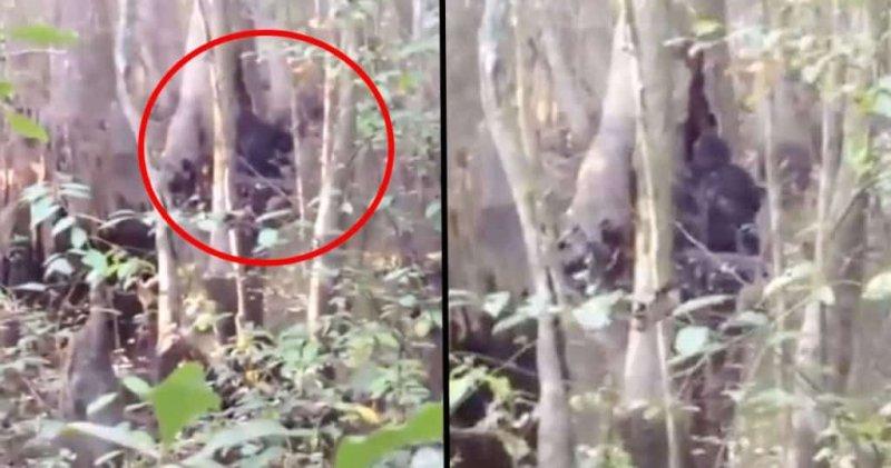 Bigfoot-sighting1.jpg